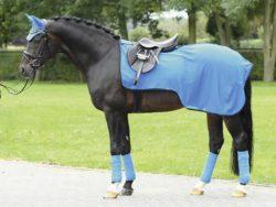 Bederní deky na koně